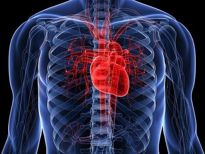 В Израиле научились печатать живые сердца на 3D-принтере