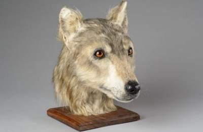 Ученые показали, как выглядели собаки 4500 лет назад