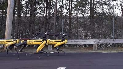 Созданы «собаки»-роботы для эвакуации авто