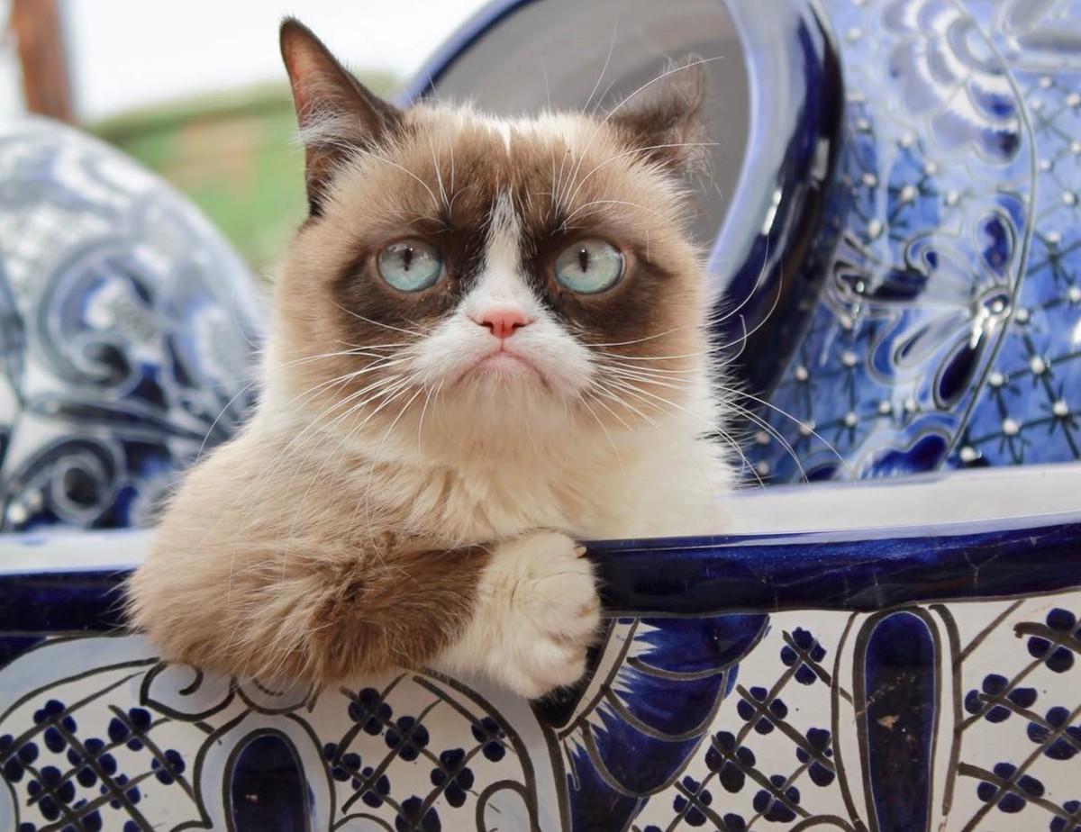 Знаменитая Grumpy Cat умерла